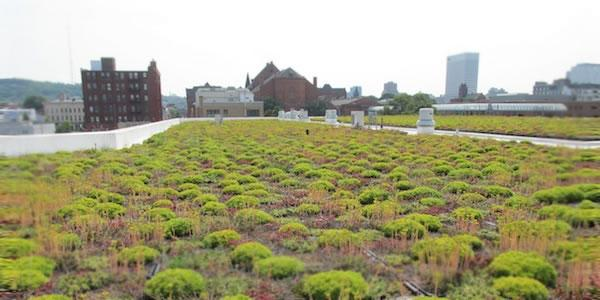 A garden rooftop on top of a building.